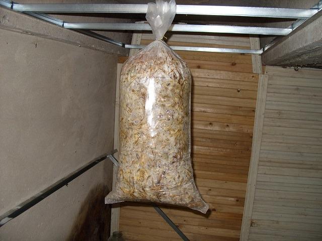 Методика выращивания грибов в домашних условиях