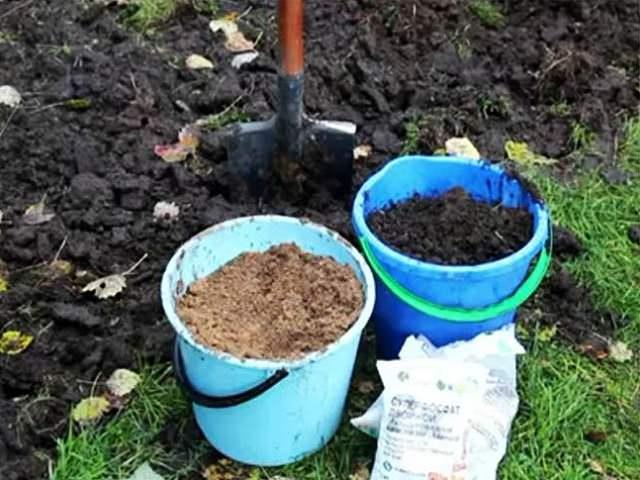 Удобрение и песок для посадки кларкии