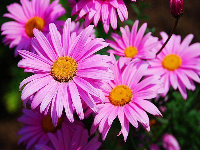 Долгоцветущие цветы