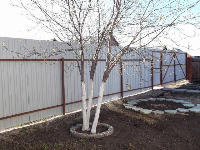 Воднодисперсионная краска для побелки деревьев