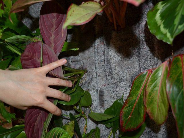 Растения в кармашках стены для вертикального озеленения