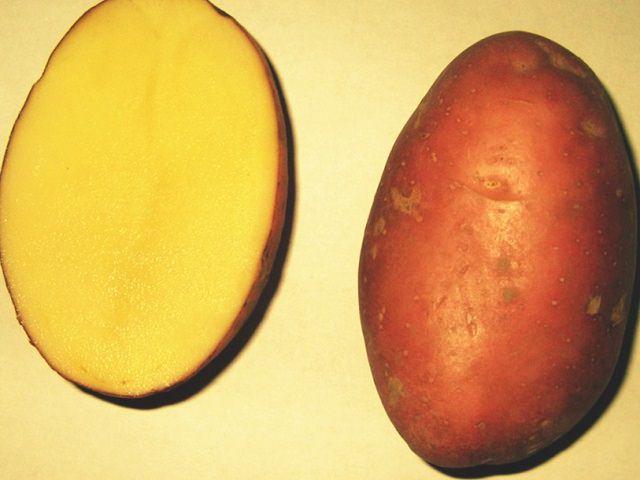 Описание сорта картофеля гранада