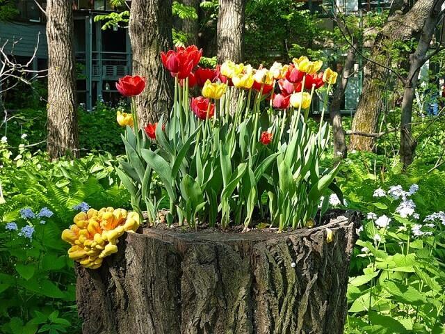 Вазон для цветов из пня