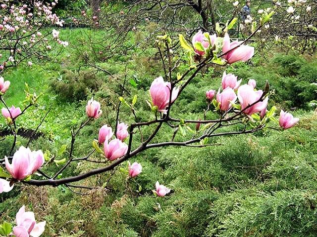 Уход за молодым садом весной