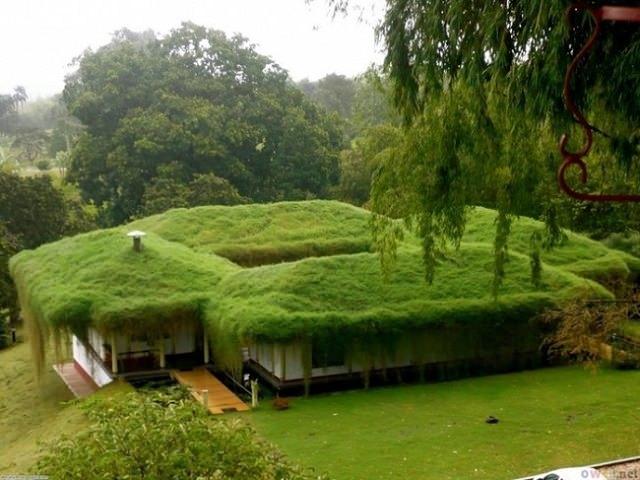 Озеленение крыши загородного дома