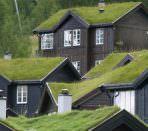 Дома с озелененными крышами