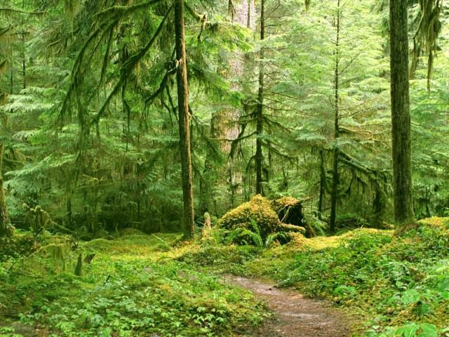 Почва жестколистных вечнозеленых Лесов Африки