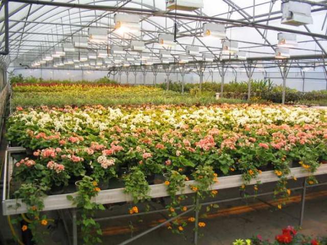 Выращивания цветов в горшках