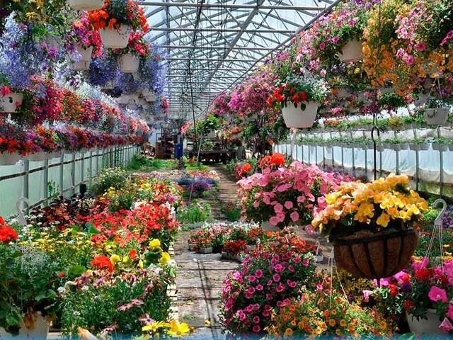 Бизнес выращивания весенних цветов