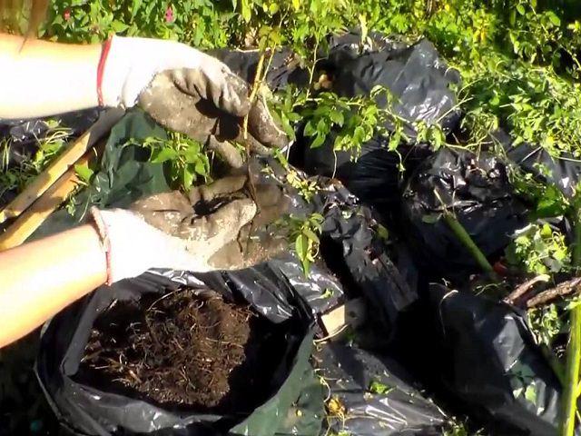 Компост из опилок и травы