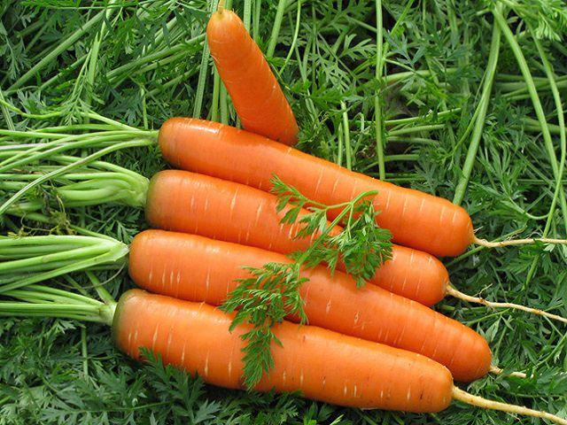 Выращенная морковь крупным планом