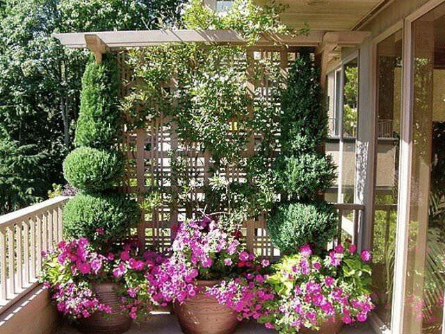цветы для лоджии