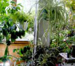 озеленение балкона