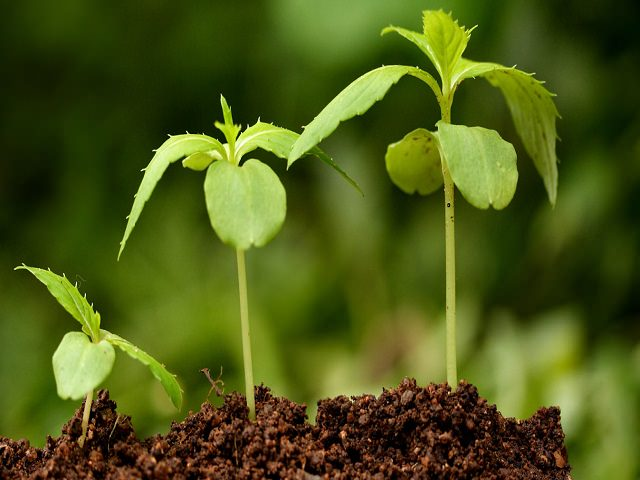 Этапы роста растения