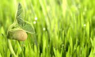 Стимуляторы роста растний