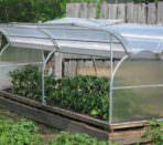 бизнес план теплицы по выращиванию овощей