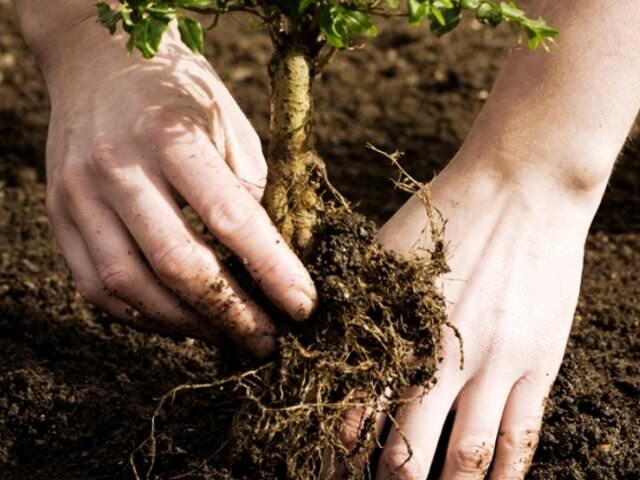 посадка деревьев сроки, время, уход