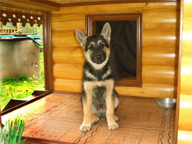 Конура для собак