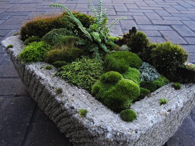Декоративные панели мох с древесной корой