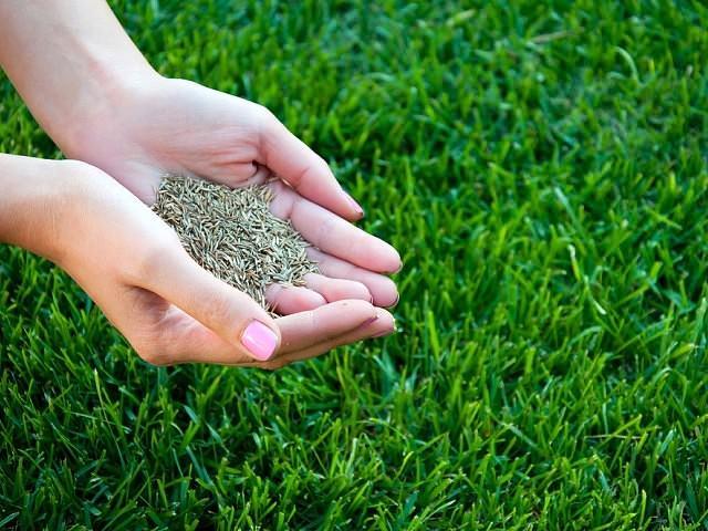 Почему на газоне растет мох?