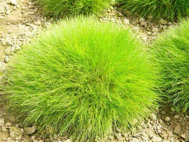 От чего появляется мох