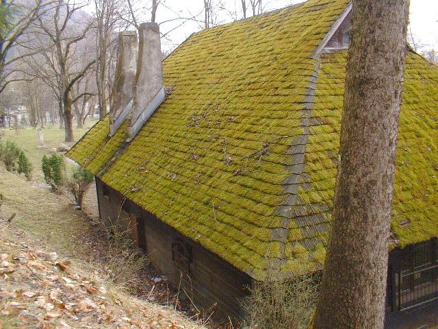 Вред мха для крыши