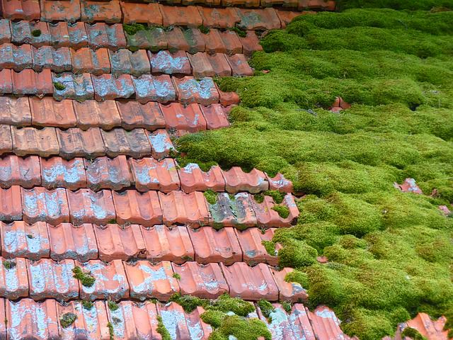 Медная сетка от мха на крыше