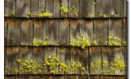 мох на крыше как избавиться