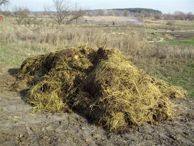 подкормка из соломы пшеницы