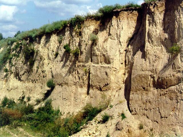 Виды распространённых типов почв- описания, разновидности и основные характеристики, таблица по ощелачиванию