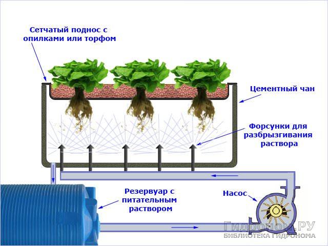 https://rozarii.ru/wp-content/uploads/2017/01/aeroponika-1.jpg