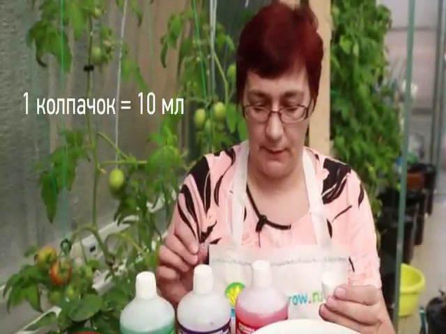 https://rozarii.ru/wp-content/uploads/2017/01/aeroponika-6.jpg