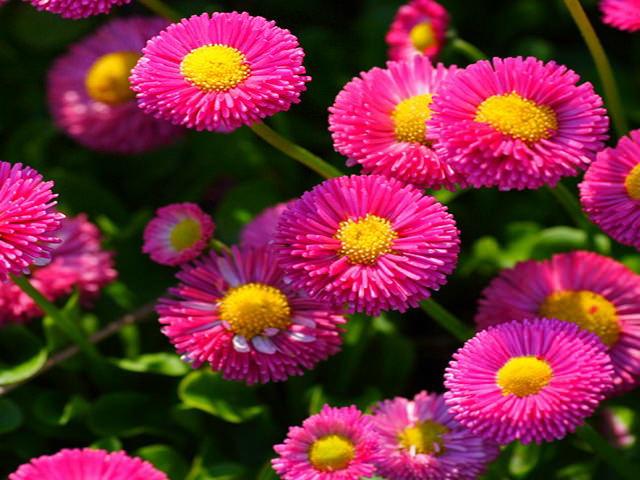 Растения весенних цветников