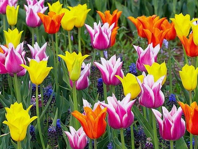 Растения цветника