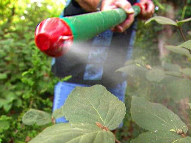 Правильное внесение химических средств в саду