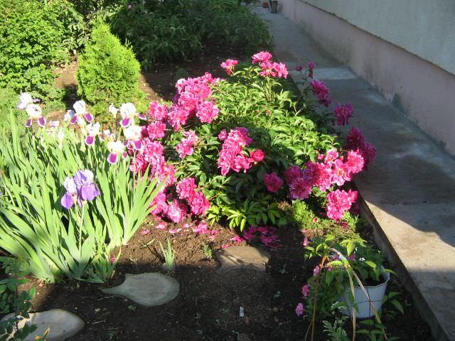 растения для бордюров фото и названия