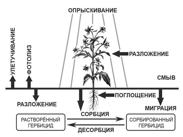 Балерина гербицид инструкция