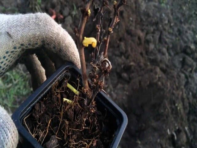 Маленький росток в контейнере
