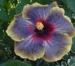 Растение с красивым цветком