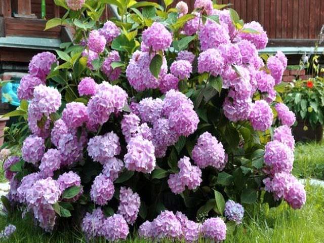 Как подготовить садовый цветок к зимовке