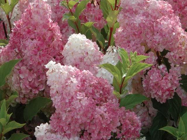 Уход за цветковым растением