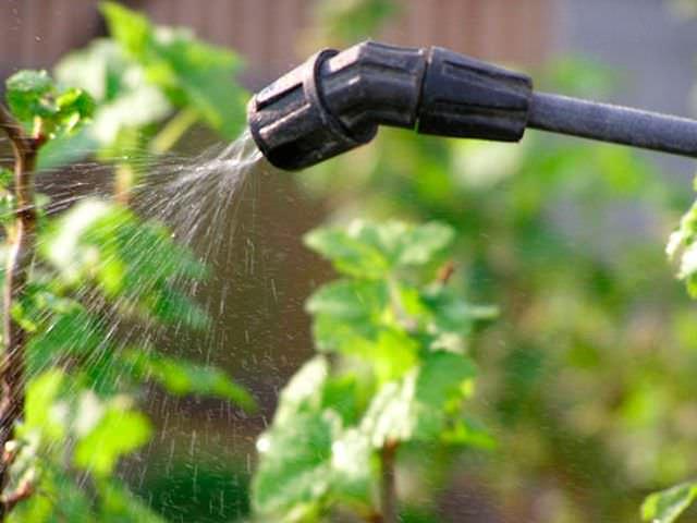 Опрыскивание растений химическими веществами