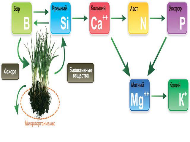 Микроэлементы для поддержания жизни цветов