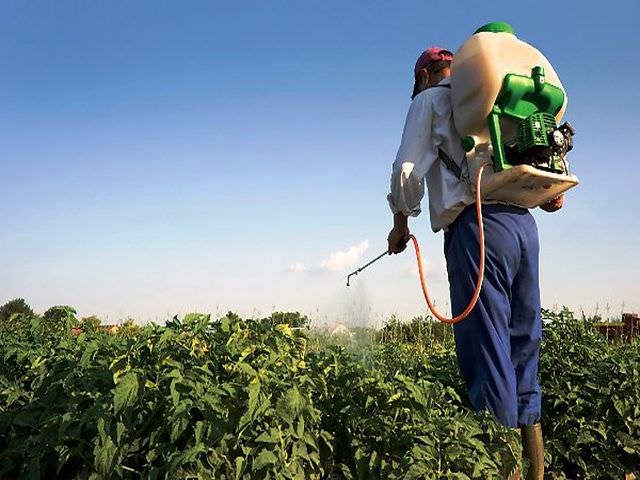 Пестициды применение