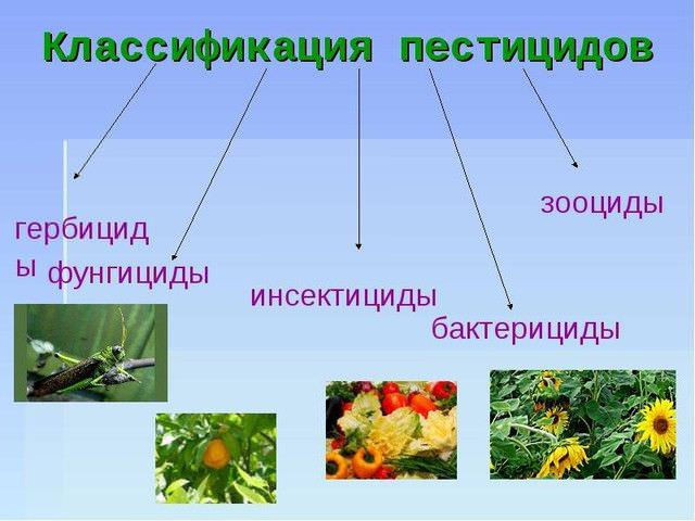 группы пестицидов