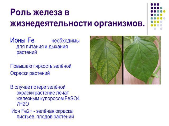 Значение железа жизнедеятельности организмов