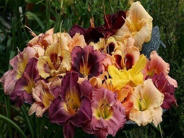 Букет цветов нежных оттенков