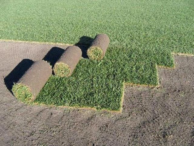 Дернина газонных трав своими руками