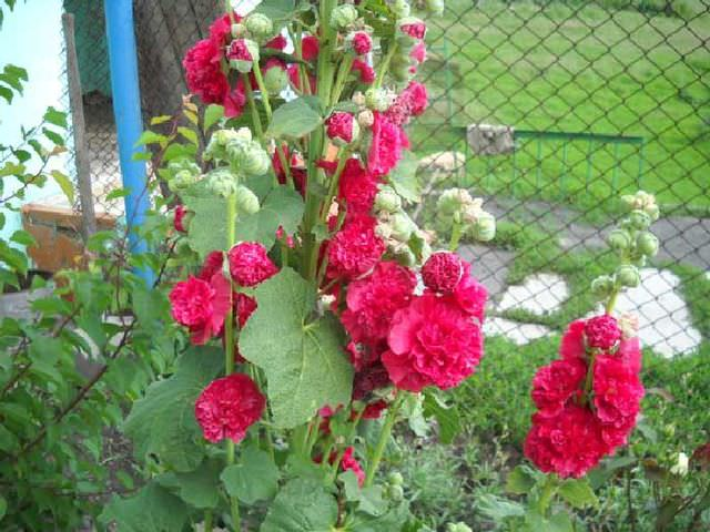 Болезни садовых растений