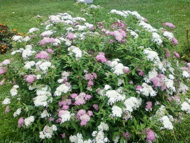 Правильный уход за декоративным растением в саду